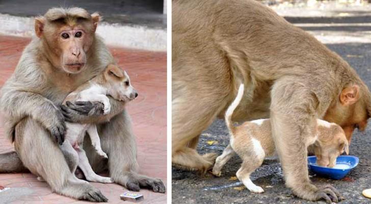 Esta mono ha adoptado un cachorro callejero y el modo en que lo cuida supera cada imaginacion