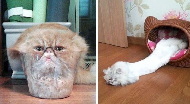 Estas fotos mostram que os gatos são feitos de um material líquido...