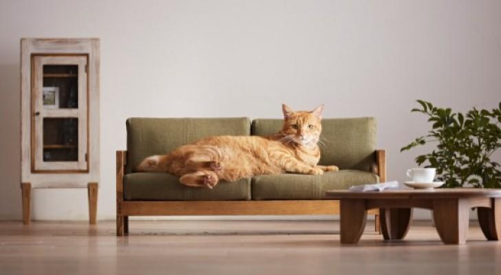 Alcuni fabbricanti di mobili tradizionali giapponesi creano letti e divani fatti su misura per gatti