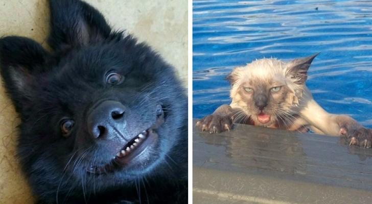 23 photos amusantes montrant que les animaux ne sont rien de plus que des humains avec des poils sur eux.