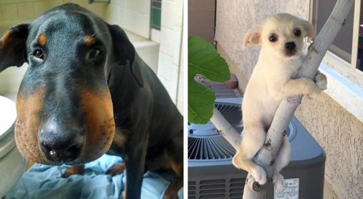 27 perros que se dieron cuenta de haber hecho una pesima eleccion