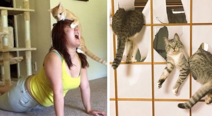 17 photos qui montrent que les chats peuvent être les animaux les plus espiègles du monde.