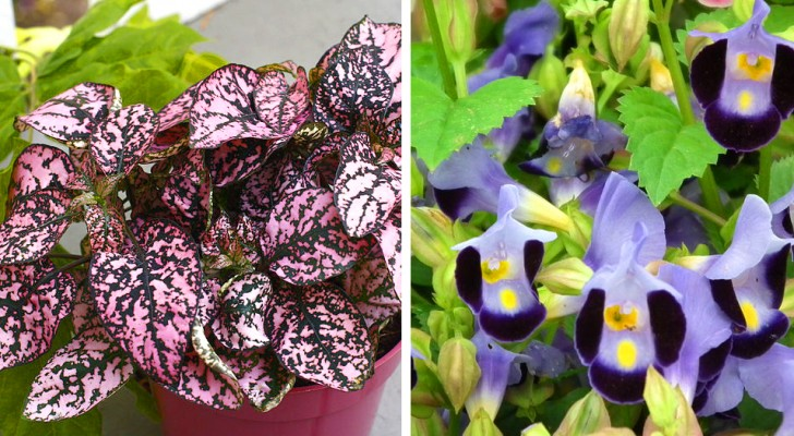 10 plants that will grow and flourish even in the darkest corner of your house
