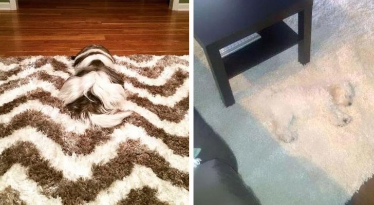 18 images that have dogs as protagonists, even if at first glance you would not think so!