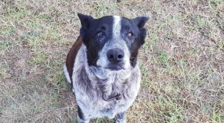 Ein dreijähriges Mädchen verirrt sich im australischen Busch: Ihr Hund bleibt die ganze Nacht bei ihr und