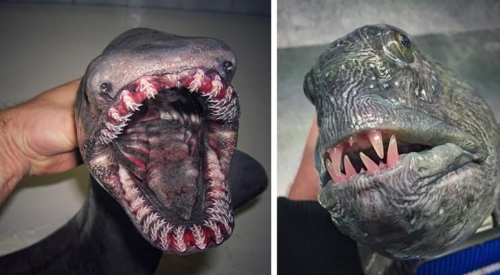 Este pescador fotografia las criaturas  mas extrañas que encuentra en las redes: el resultado es de un film de horror
