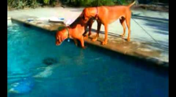 O cachorro que se preocupa com seu dono