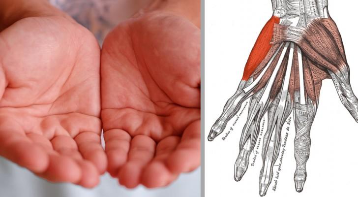7 signaux liés à la santé de votre corps que vous ne pouvez connaître qu'en regardant vos mains