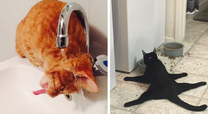 18 cats that are so full of nonsense ... that it is impossible to keep from laughing!