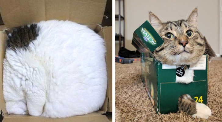 20+ photos of cats that show they do not have the faintest idea of ​​what a bed is!