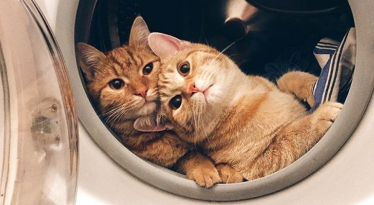 Some photos of cats so funny that they will convince you to immediately adopt one