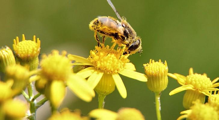 Queste sono le 7 principali minacce delle api e come possiamo aiutarle