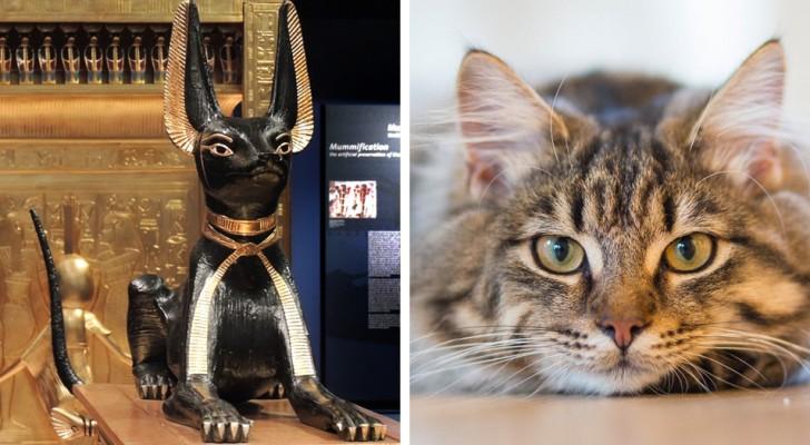 Il gatto: l'animale da compagnia che è riuscito ad addomesticarsi da solo
