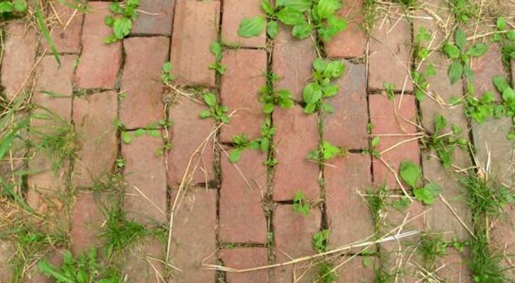 As ervas daninha te perseguem? Veja uma solução econômica e menos invasiva que produtos químicos