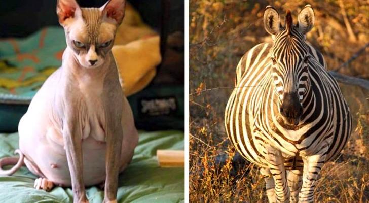 20 future mamme del regno animale che vi conquisteranno con la loro tenerezza