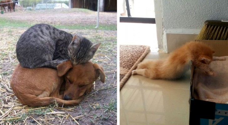 30 hilarious images that will convince you that cats can sleep ANYWHERE