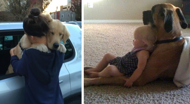 Dogs teach us every day what it means to love unconditionally! Here are 17 irresistible photos ...