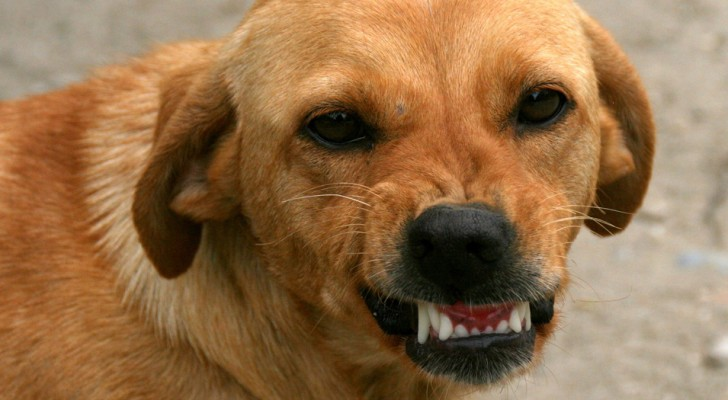 Science confirms that dogs are able to recognize a bad person and this is how they do it!