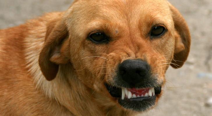 Die Wissenschaft bestätigt, dass Hunde in der Lage sind, eine schlechte Person zu erkennen: so machen sie es