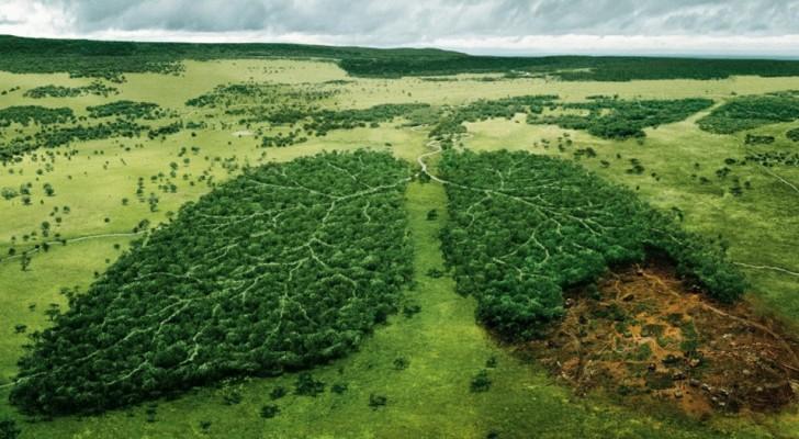 24 des campagnes publicitaires environnementales les plus marquantes, qui suscitent la réflexion