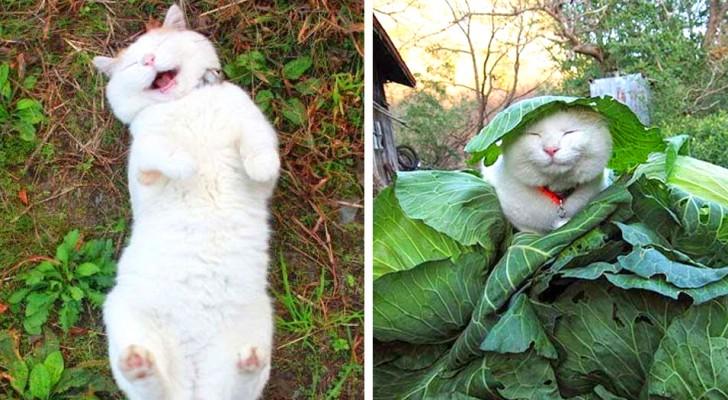 20 foto's van honden en katten waar je een goed humeur van krijgt