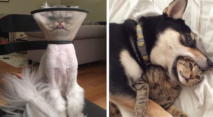 Även djur kan ha dåliga dagar, här kommer några bilder som visar att det inte finns något tvivel om den saken