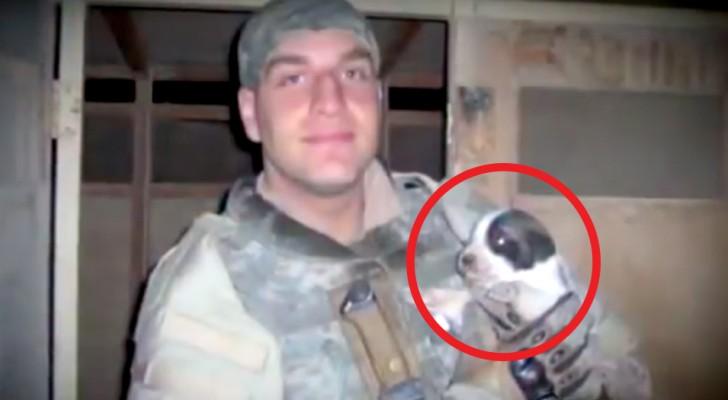 Die Eltern adoptieren den Hund des verstorbenen Sohnes: Während eines Films bemerken sie ein unmissverständliches Zeichen