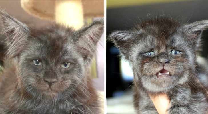 This cat with a human face is the strangest thing you will see today and her photos have been seen around the world