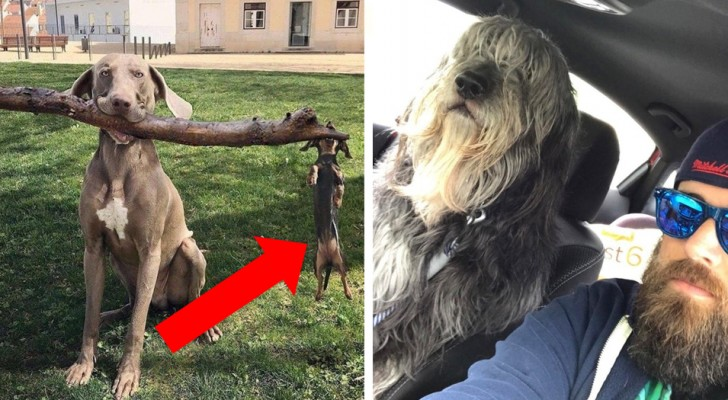 Hundar som fångats i hejdlöst roliga situationer, framför de här 26 bilderna är det omöjligt att inte skratta
