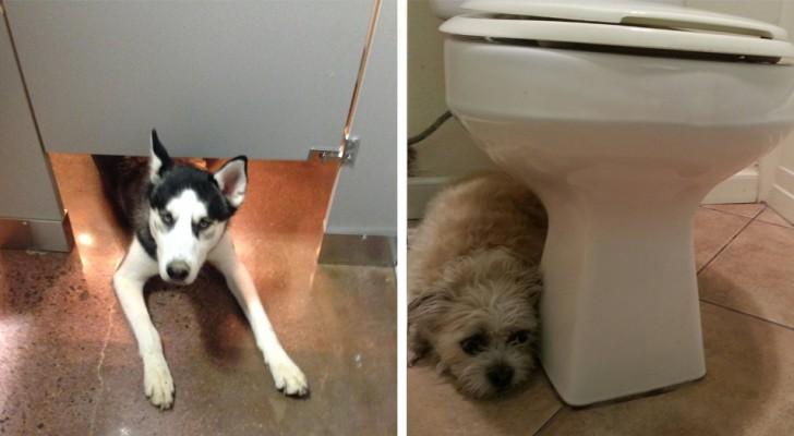 Tu perro te sigue cuando vas al baño? Esto es aquello que esta buscando de decirte