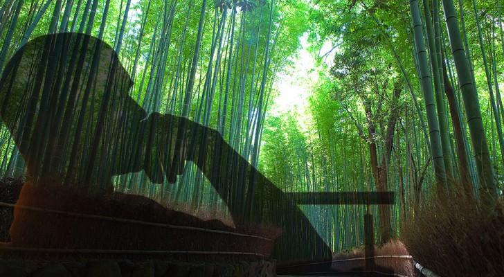 Het sprookje van de varen en de bamboe die je moet lezen als je door een moeilijke periode heen gaat