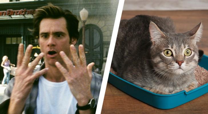 Un parassita nelle feci del gatto stimola lo spirito imprenditoriale in chi viene infettato: ecco lo studio