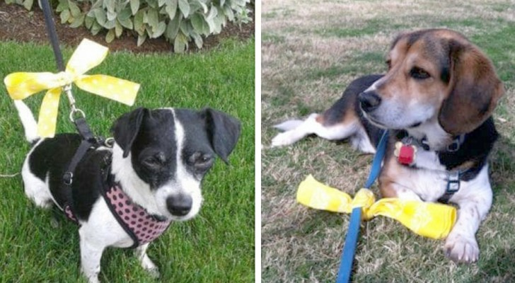 Here is how you should behave if you see a dog with a yellow ribbon bow tied to its leash