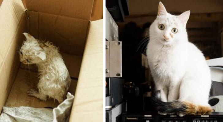 16 bilder av katter före och efter adoption som kommer att värma ditt hjärta