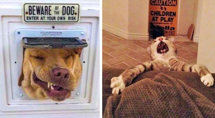Alcune divertentissime foto di cani e gatti che vi strapperanno una risata
