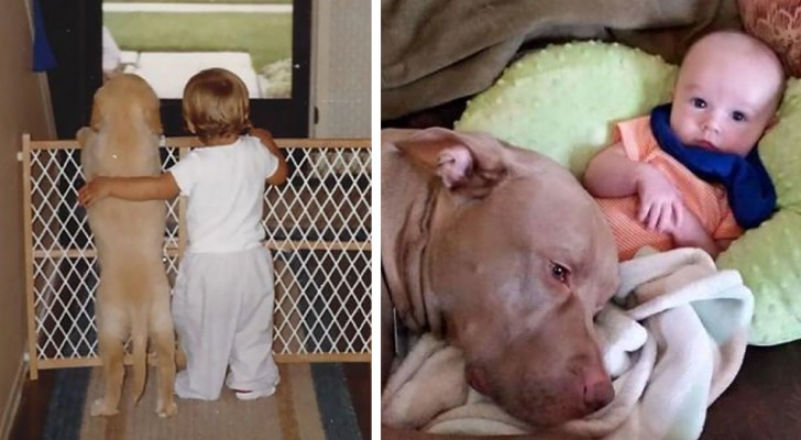17 immagini di rara dolcezza che raccontano la meravigliosa amicizia tra bambini e cani