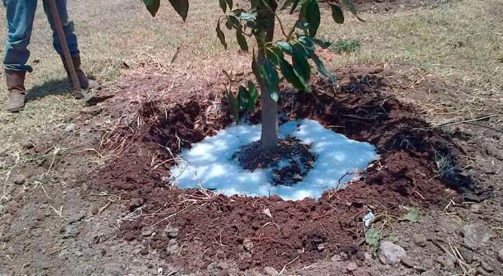 Ecco a voi la Pioggia Solida che può rivoluzionare l'agricoltura e combattere la siccità