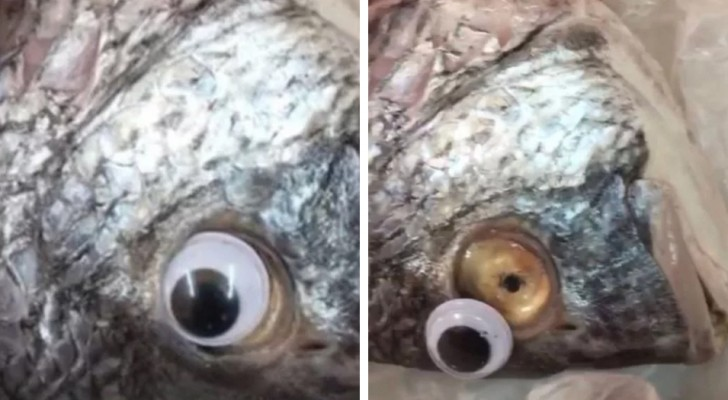 Un poissonnier qui appliquait de faux yeux sur les poissons pour les faire apparaître plus frais a été démasqué.