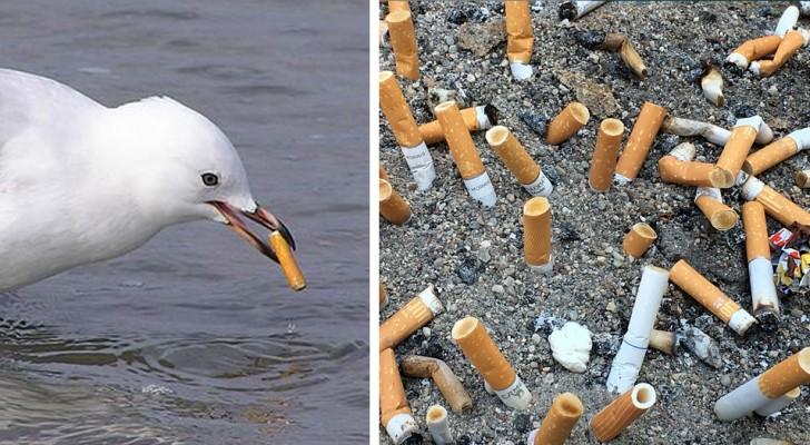 I mozziconi di sigaretta sono la più grande fonte di inquinamento degli oceani