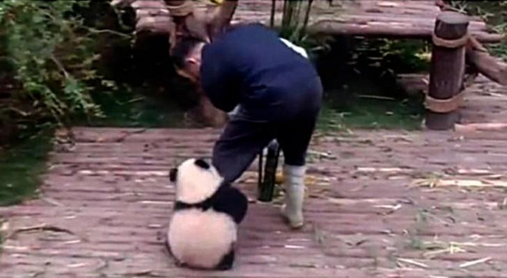 Deshalb ist es die schönste Aufgabe der Welt, der Pfleger von Pandawelpen zu sein