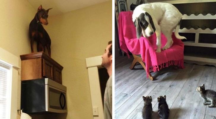 10 lustige Bilder von Hunden, die von etwas ALBERNEN verängstigt sind.