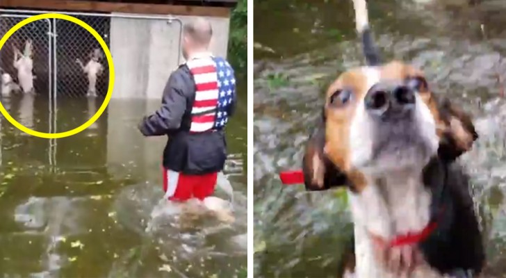 Hundar övergavs instängda i burar under orkanen Florence, en del volontärer återvände för att rädda dem