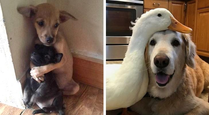 16 fotos de amistades animales...asi curiosas de parecer irreales!