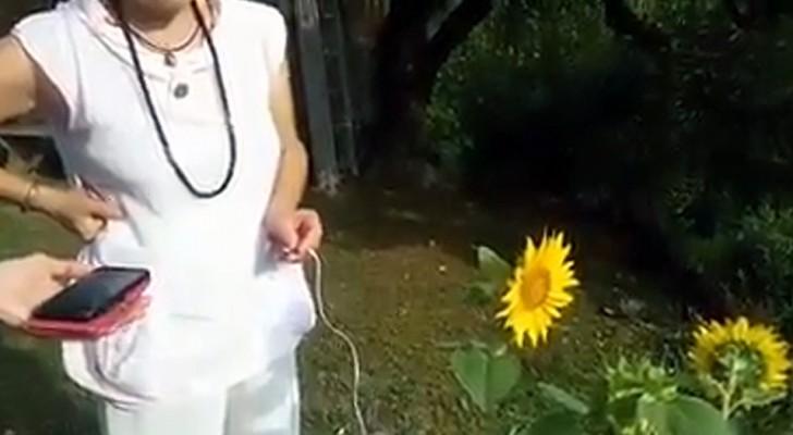 Una donna registra il suono emesso da un girasole: il risultato ha qualcosa di celestiale
