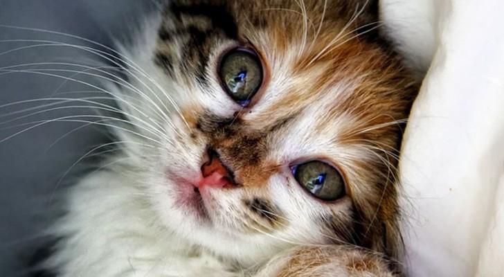 Adottare un gatto allunga la vita: combattono la depressione e fanno bene al cuore