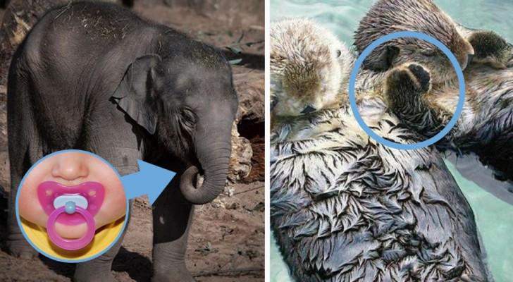 14 fatti curiosi sul mondo animale che probabilmente non conoscevi