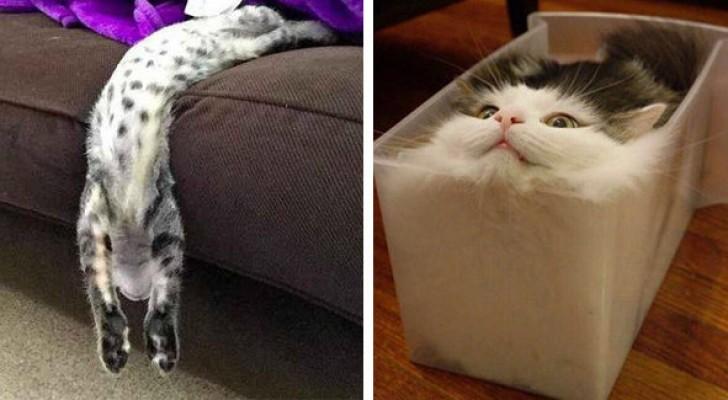 Deze 20 leuke foto's bewijzen dat katten van vloeibaar materiaal gemaakt zijn