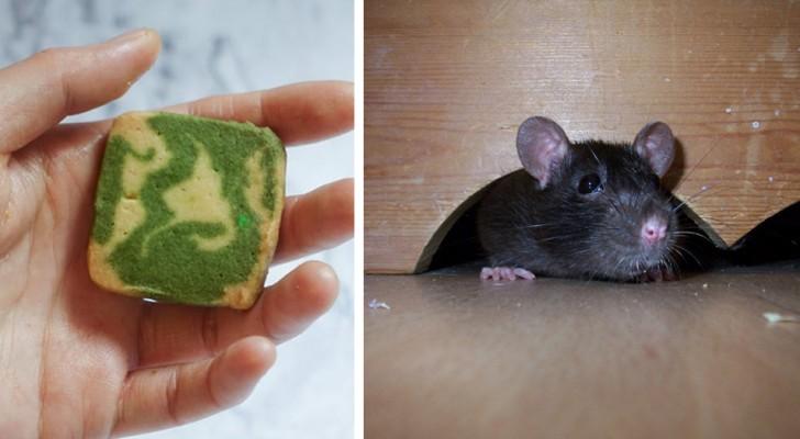 Hoe je muizen ver weg uit je huis kunt houden zonder chemische produkten te gebruiken