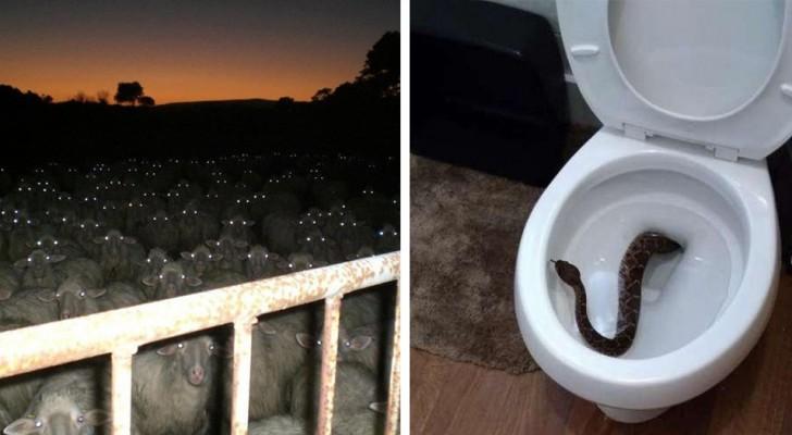 Queste 14 foto sono così terrificanti che anche l'amante della Natura più incallito non riuscirà a guardarle