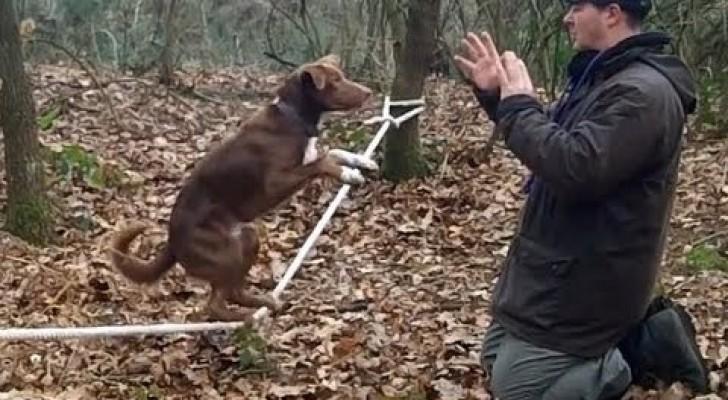 Il formidabile cane acrobata